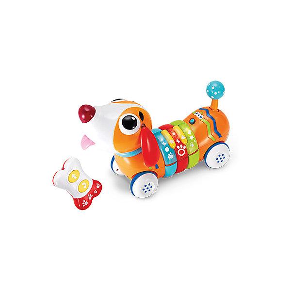 Радужный щенок WinFun с дистанционным управлениемИнтерактивные игрушки для малышей<br>Характеристики товара:<br><br>• возраст: от 1,5 лет;<br>• материал: пластик;<br>• в комплекте: собака, пульт;<br>• тип батареек: 3 батарейки АА (для игрушки), 2 батарейки ААА (для пульта);<br>• наличие батареек: в комплект входят батарейки для игрушки;<br>• размер упаковки: 30х20,5х14 см;<br>• вес упаковки: 867 гр.;<br>• страна бренда: Китай.<br><br>Радужный щенок WinFun - игрушка на инфракрасном дистанционном управлении. Щенок управляется пультом управления и перемещается при помощи колесиков. Игрушка оснащена световыми и звуковыми эффектами, которые сделают игру еще интересней.<br><br>Радужного щенка WinFun можно приобрести в нашем интернет-магазине.<br>Ширина мм: 300; Глубина мм: 205; Высота мм: 140; Вес г: 867; Возраст от месяцев: 18; Возраст до месяцев: 2147483647; Пол: Унисекс; Возраст: Детский; SKU: 7771965;