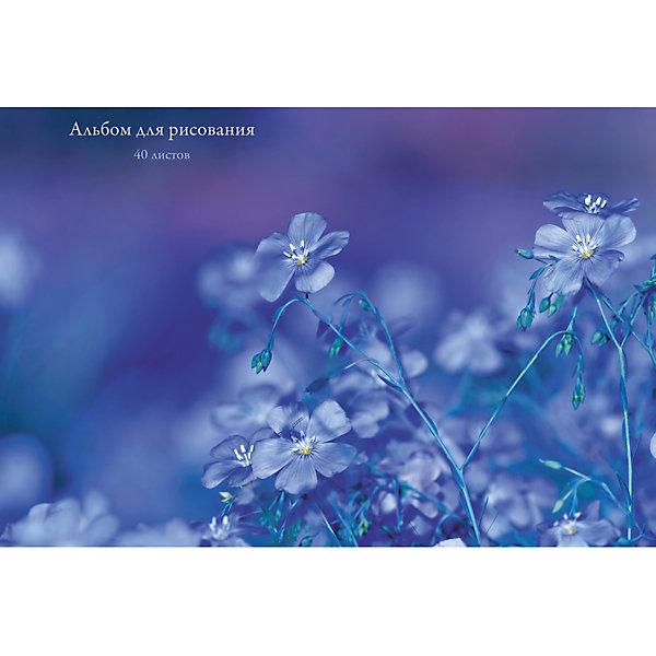 Купить Альбом для рисования Канц-Эксмо Сиреневые цветы , 40 листов, Россия, разноцветный, Унисекс