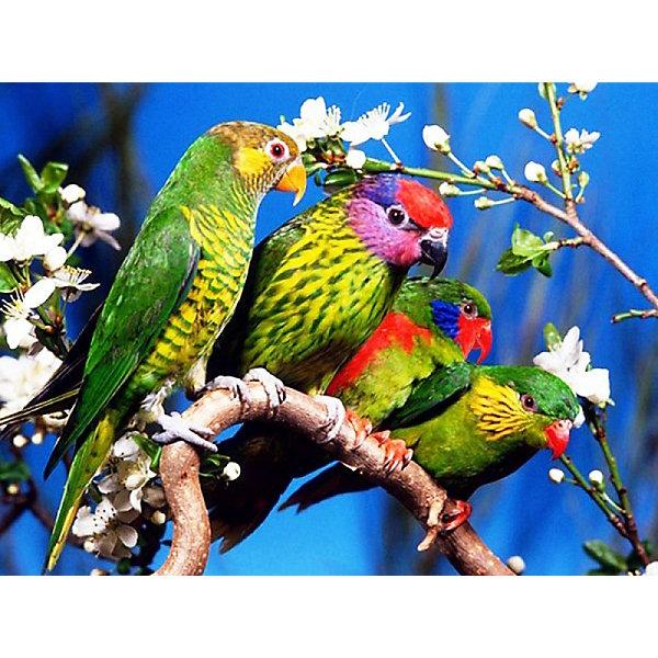 Color KIT Раскраска по номерам на картоне Color KIT Волнистые попугаи, 30х40 см раскраски по номерам на картоне прайд раскраски по номерам на картоне ks031