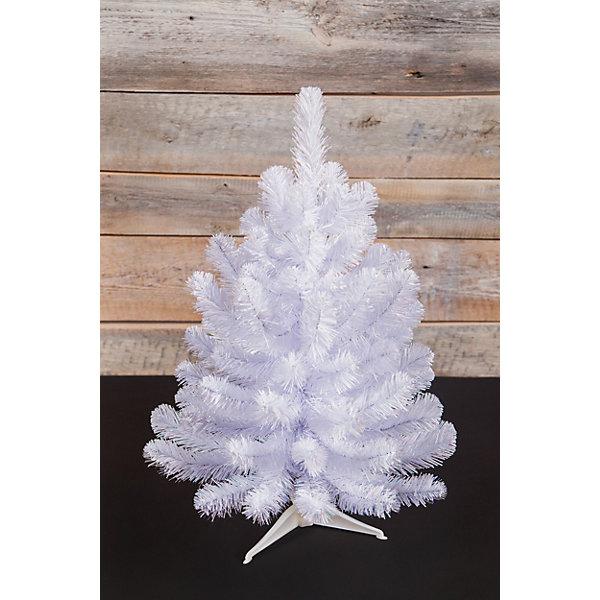 Triumph Tree Ель Исландская, Белоснежная, 60 см.