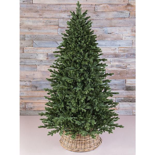 Triumph Tree Ель Шервуд премиум, Зеленая, 215 см.