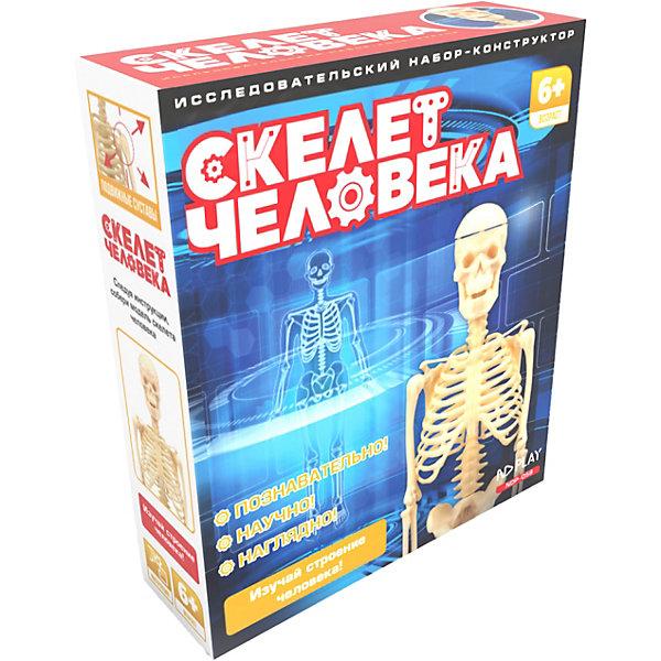 Исследовательский набор ND Play Скелет человекаАнатомия<br>Характеристики:<br><br>• в наборе: темя; лицевой череп; нижняя челюсть; лопатки 2 шт; ключица 2 шт; таз; руки 2 шт; ноги 2 шт; рёбра 2 шт; позвоночник; стержень; основание; брошюра<br>• материал: пластик<br>• упаковка: картонная коробка<br>• страна бренда: Китай<br><br>С помощью деталей набора ребенок соберет скелет человека, и изучит, как работают мышцы, как соединяются кости и их названия.