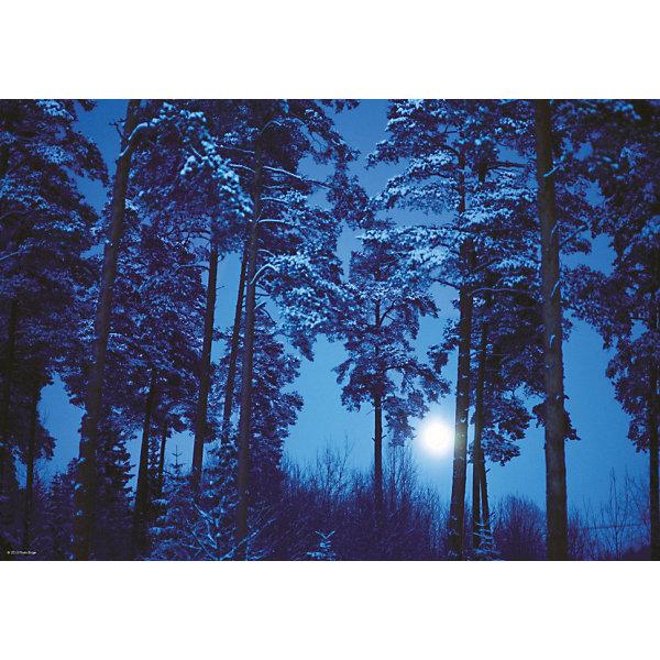Купить Пазл Heye Полнолуние в лесу , 500 деталей, Германия, Унисекс