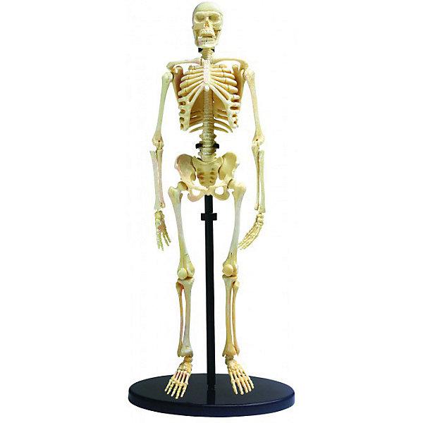 Купить Анатомический набор Edu-Toys, 37 деталей, Китай, Унисекс