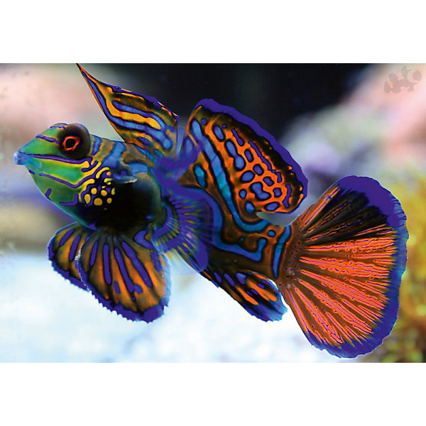 Molly Картина-мозаика Радужная рыбка