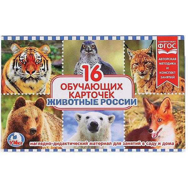 Умка Обучающие карточки «Животные России»