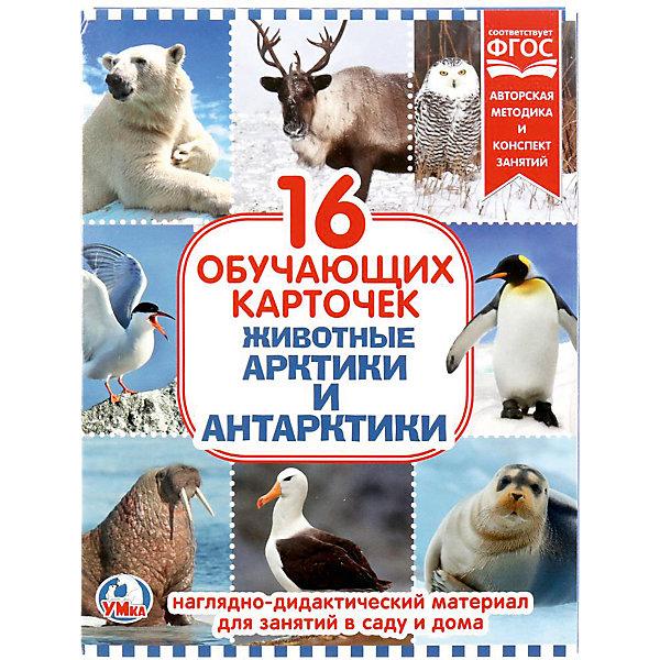 Обучающие карточки Умка «Животные Арктики и Антарктиды»Обучающие карточки<br>Характеристики товара:<br><br>• материал: картон<br>• в комплекте: 16 карточек<br>• размер карточки: 22х17 см<br><br>Разноцветные развивающие карточки выступают в качестве наглядного пособия для обучения детей. Развивают память, внимание, логическое мышление, знакомят ребенка с окружающим миром, новыми предметами.