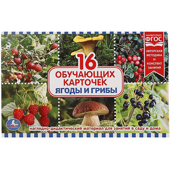 Умка Обучающие карточки Умка «Ягоды и грибы» одежда обучающие карточки