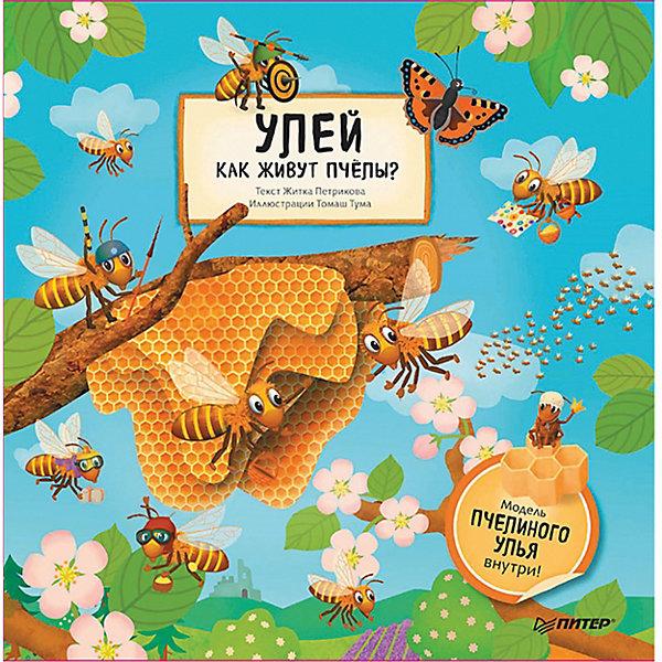 ПИТЕР Улей. Как живут пчёлы?