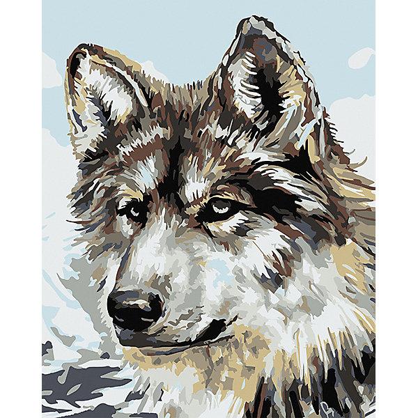 Набор для раскрашивания по номерам Артвентура «Серый волк»Картины по номерам<br>Характеристики:<br><br>• тип товара: набор для раскрашивания <br>• комплектация: холст на подрамнике, краски, набор кистей, инструкция, контрольный лист, подвесы для картины, палитра-держатель для баночек, стаканчик для принадлежностей<br>• размер: 40х50 см<br>• страна бренда: Россия<br><br>Набор для творчества позволит научиться рисовать. Он содержит все необходимое для создания картины. Холст размечен цифрами и контурами, по которым наносится краска из промаркированных баночек. Набор имеет уникальный сюжет.