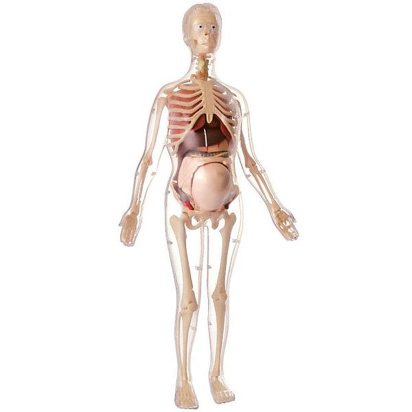 Купить Анатомический набор Edu Toys Беременная женщина, 56 см, Edu-Toys, Китай, Унисекс
