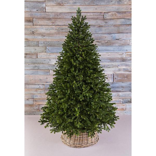 Triumph Tree Можжевельник Triumph Tree,