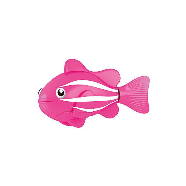 ZURU РобоРыбка Клоун розовая, RoboFish zuru роборыбка клоун желтая robofish