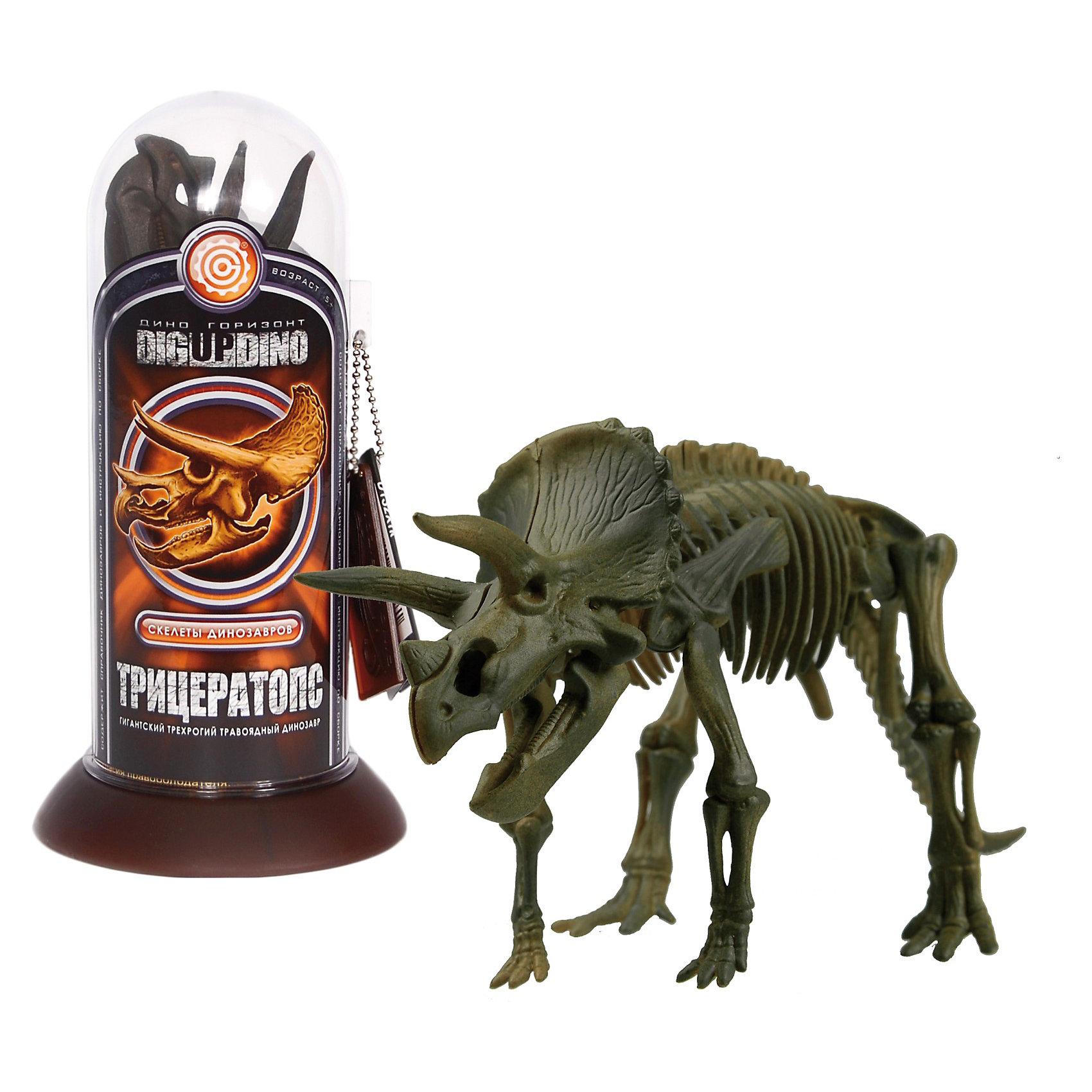 Раскопки: Трицератопс (Скелет динозавра с тремя рогами)