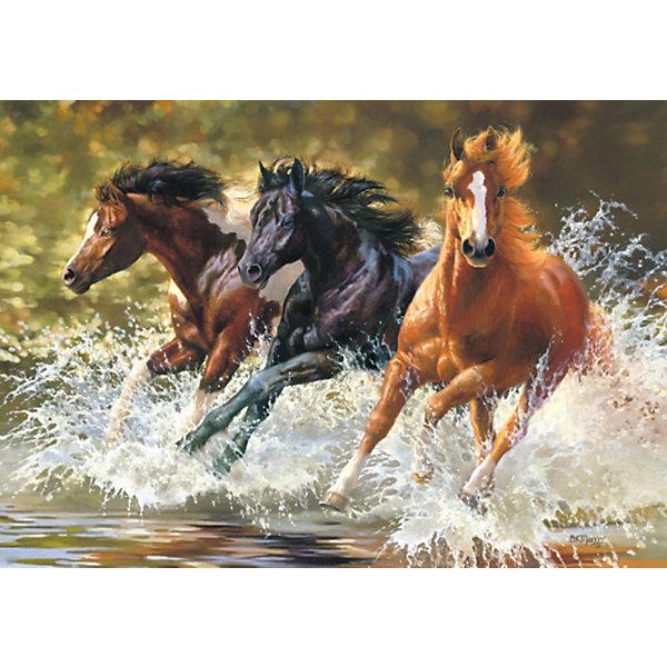 Castorland Пазлы Лошади, 500 деталей, Castorland puzzle 500 лошади b 52509
