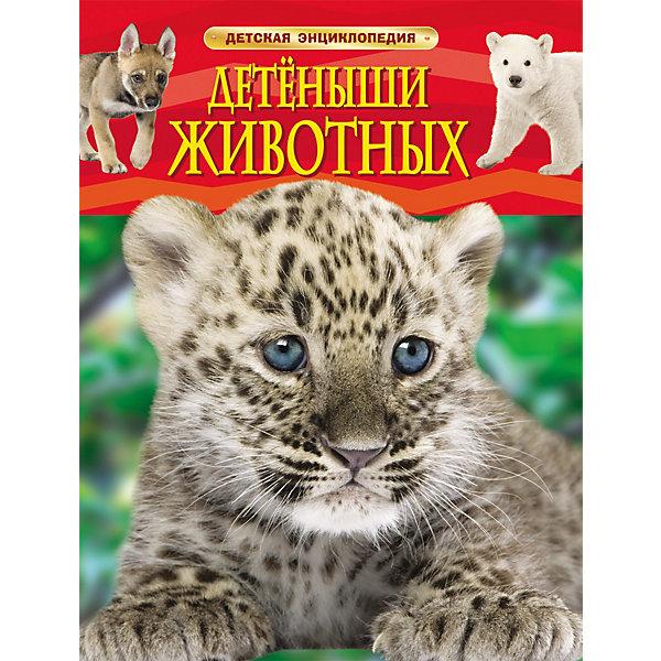 Росмэн Детская энциклопедия Детеныши животных
