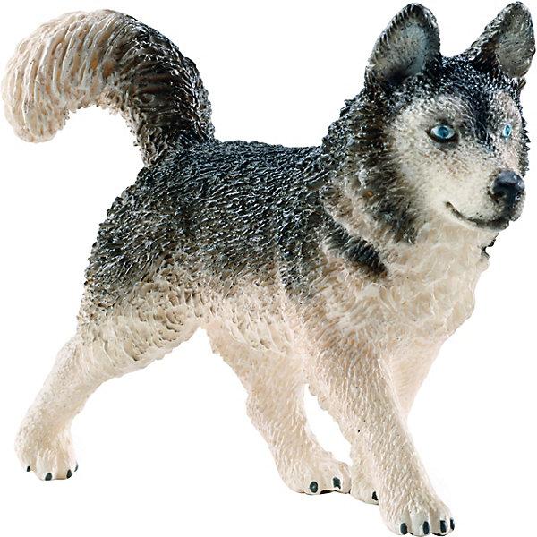 Хаска, SchleichМир животных<br>Хаска, Schleich (Шляйх) – это высококачественная коллекционная и игровая фигурка.<br>Фигурка Хаски прекрасно разнообразит игру вашего ребенка и станет отличным пополнением коллекции его фигурок животных. Хаски - одна из древнейших пород собак. Выводилась как ездовая собака. В настоящее время используется как собака-компаньон и выставочная собака. Хаски были выведены чукчами. Им нужно было неприхотливое средство передвижения для расширения своих владений. В начале ХХ года в Советском Союзе составляли реестр северных пород, и хаски не попали в него из-за малых габаритов. Их посчитали недостаточно эффективными для перемещения больших грузов на дальние расстояния. К 40-годам прошлого столетия популяция сибирских хаски практически полностью растворилась среди лаек аборигенов. Порода была сохранена в США благодаря завозу собак для участия в гонках из Анкориджа в Ном на Аляске. Особенностью воспитания ездовых собак, и хаски в частности, является тот факт, что кормят их только зимой, когда они начинают работать в упряжке. По весне, когда снег сходит, их выпрягают и они начинают кормиться сами. Поэтому у хаски, к ездовым качествам сильно развит охотничий инстинкт. <br>Прекрасно выполненные фигурки Schleich (Шляйх) являются максимально точной копией настоящих животных и отличаются высочайшим качеством игрушек ручной работы. Каждая фигурка разработана с учетом исследований в области педагогики и производится как настоящее произведение для маленьких детских ручек. Все фигурки Schleich (Шляйх) сделаны из гипоаллергенных высокотехнологичных материалов, раскрашены вручную и не вызывают аллергии у ребенка.<br> <br>Дополнительная информация:<br><br>- Размер фигурки: 7,7 х 5,3 х 2,3 см.<br>- Материал: высококачественный каучуковый пластик<br><br>Фигурку Хаски, Schleich (Шляйх) можно купить в нашем интернет-магазине.<br>Ширина мм: 116; Глубина мм: 73; Высота мм: 20; Вес г: 28; Возраст от месяцев: 36; Возраст до месяцев: 96; Пол: Унисекс; Возраст: Детский