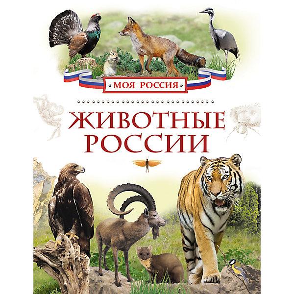 Росмэн Животные России, Моя Россия цены
