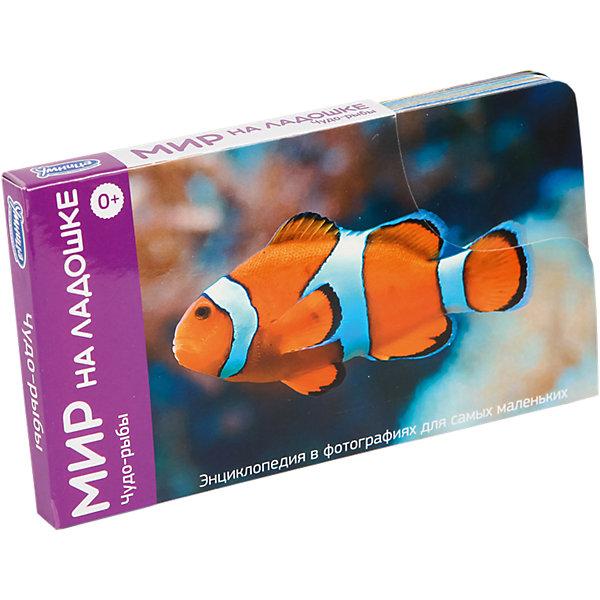 Мир на ладошке Чудо-рыбы (выпуск 5)Обучающие карточки<br>Мир на ладошке Чудо-рыбы – тематические карточки с интересной информацией о мире.<br>Каждая тематическая карточка помогает ребенку развить внимание, логику, эрудицию, воображение, образное мышление, интеллект, память и многое другое. Ребенок сможет узнавать слова, которые раньше не слышал, получить ответы на самые интересные вопросы и массу удовольствие от знаний, приобретенных с помощью игры. Тема данного набора: рыбы. В комплекте 24 карточки с изображение и текстом, а также карточка с инструкцией для родителей.<br><br>Дополнительная информация:<br><br>- в наборе: 24 карточки<br><br>Мир на ладошке Чудо-рыбы можно купить в нашем интернет магазине.