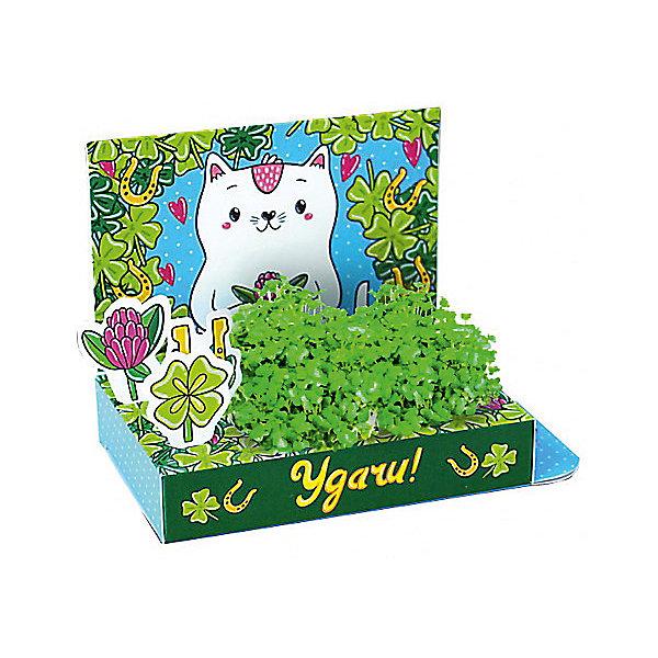 Бумбарам Набор для выращивания Живая открытка - Удачи! Кот, Happy Plant наборы для выращивания happy plant подарочный набор живая открытка с любовью