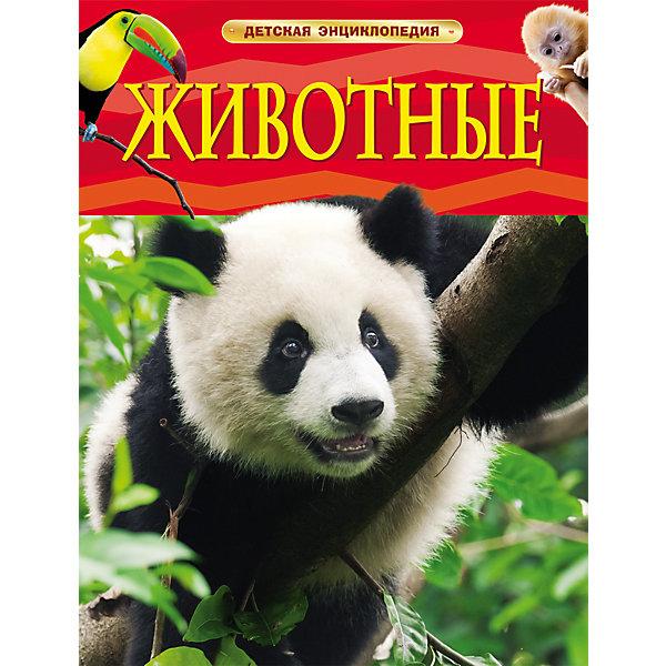 Росмэн Детская энциклопедия Животные закирова нелли джаз детская энциклопедия cd