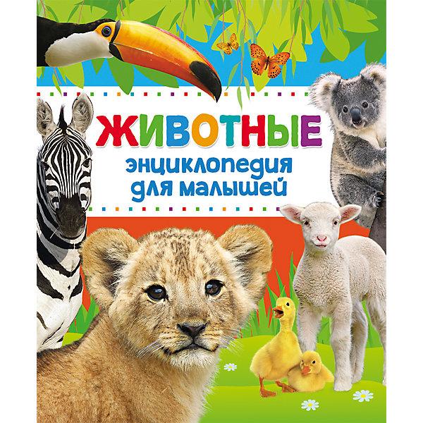 Купить Энциклопедия для малышей Животные , Росмэн, Россия, Унисекс