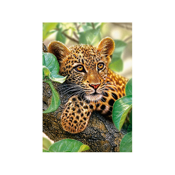Castorland Пазл Ягуар на дереве, 1500 деталей,