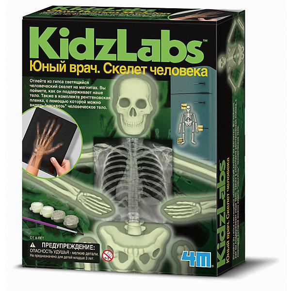 Набор Юный врач. Скелет человекаАнатомия<br>Набор Юный врач. Скелет человека.<br><br>Характеристика: <br><br>• Возраст: от 8 лет<br>• Материал: гипс, пластик. <br>• Размер: 6x17х21,5 см.<br>• Комплектация: формы для отливки костей, рентгеновские пленки, настенная схема скелета, пакеты с гипсовым порошком, кисть, серая и светящаяся краски, магниты в форме костей.<br>• Развивает внимание, мелкую моторику, воображение; расширяет кругозор. <br><br>Набор Юный врач. Скелет человека расскажет детям о том, как устроено наше тело. В наборе есть все, чтобы дать представления о разных костях, их строении и функциях. Благодаря специальным формам, ребенок сможет сам отлить кости человеческого скелета. Инструменты, выполненные очень реалистично, сделают игру еще интереснее и увлекательнее. <br>Все детали изготовлены из высококачественного прочного пластика абсолютно безопасного для детей.<br>Игры с набором помогут развить мелкую моторику и внимание, расширят кругозор ребенка. Прекрасный подарок для вашего юного врача! <br><br>Набор Юный врач. Скелет человека можно купить в нашем интернет-магазине.<br>Ширина мм: 215; Глубина мм: 170; Высота мм: 60; Вес г: 552; Возраст от месяцев: 96; Возраст до месяцев: 2147483647; Пол: Унисекс; Возраст: Детский; SKU: 5487897;