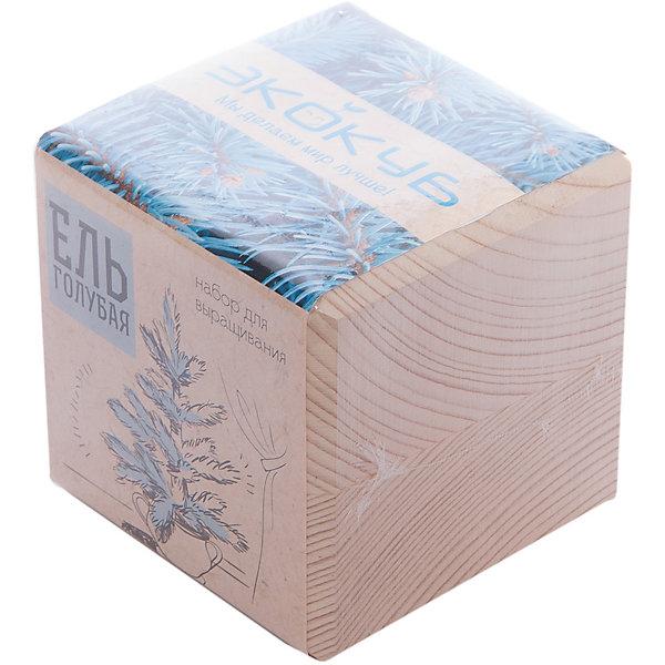 Набор для выращивания Голубая ель, ЭкокубВыращивание растений<br>Наборы Эко Куб - удивительная вещь, которая станет необычным украшением дома или оригинальным подарком. С виду это лишь маленьникй деревянный кубик, но внутри него спрятано настоящее деревце, которое вы самостоятельно сможете прорастить из семечка и собрать урожай. Это увлекательное и полезное занятие для всей семьи, которое поможет родителям стать ближе к своим детям. Набор учит ребенка заботиться о живых существах, воспитывает чувство ответственности.<br>Ширина мм: 80; Глубина мм: 80; Высота мм: 80; Вес г: 190; Возраст от месяцев: 60; Возраст до месяцев: 2147483647; Пол: Унисекс; Возраст: Детский; SKU: 5596044;