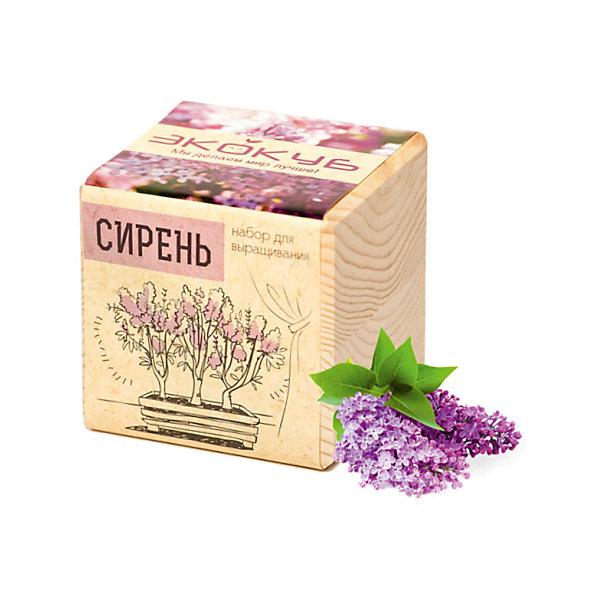 """Фотография товара набор для выращивания """"Сирень"""", Экокуб (5596047)"""