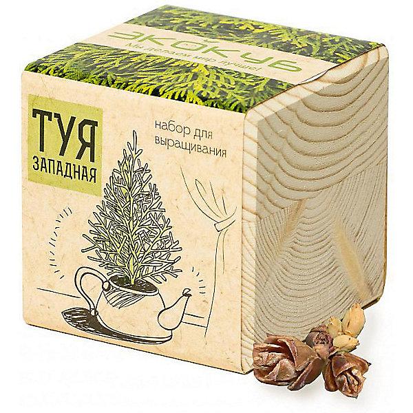 Набор для выращивания Туя, ЭкокубВыращивание растений<br>Наборы Эко Куб - удивительная вещь, которая станет необычным украшением дома или оригинальным подарком. С виду это лишь маленьникй деревянный кубик, но внутри него спрятано настоящее деревце, которое вы самостоятельно сможете прорастить из семечка и собрать урожай. Это увлекательное и полезное занятие для всей семьи, которое поможет родителям стать ближе к своим детям. Набор учит ребенка заботиться о живых существах, воспитывает чувство ответственности.<br>Ширина мм: 80; Глубина мм: 80; Высота мм: 80; Вес г: 197; Возраст от месяцев: 60; Возраст до месяцев: 2147483647; Пол: Унисекс; Возраст: Детский; SKU: 5596051;