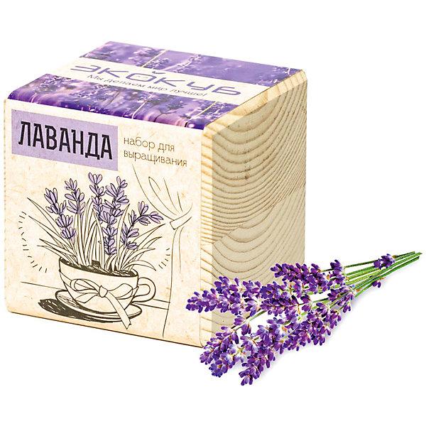 """Фотография товара набор для выращивания """"Лаванда"""", Экокуб (5596053)"""