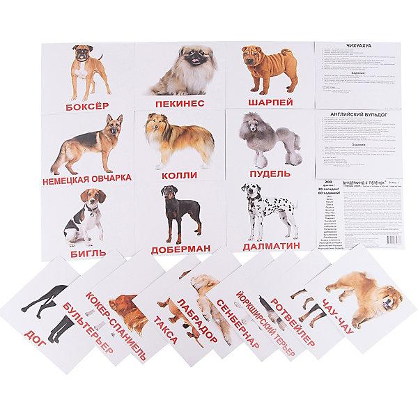 Набор обучающих карточек Вундеркинд с пелёнок Породы собак 20 штукОбучающие карточки<br>Характеристики:<br><br>• ISBN: 4612731630386;<br>• бренд: Вундеркинд с пеленок;<br>• вес: 190 гр;<br>• размер: 19,5x16,5x1 см;<br>• возраст: от 3 лет;<br>• количество карточек: 20 шт.<br><br>Комплект карточек «Породы собак» представляет из себя двадцать карточек из мелованного картона. На каждой из них фотографии собак на цветном фоне.<br><br>Изучение таких картинок поможет развить у ребенка интерес и поможет в формировании фотографической памяти.<br><br>В набор карточек вошли фотографии собак разных пород: пекинес, чихуахуа, далматин, ротвейлер, лабрадор, доберман, бультерьер, сенбернар, бигль, дог, колли, пудель, такса, боксёр, чау-чау, шарпей, кокер-спаниель, немецкая овчарка, английский бульдог, йоркширский терьер.<br><br>Для закрепления усвоенной информации на обороте карточек указанны десять занимательных фактов о собаках, три задания и одна логическая загадка.<br><br>Комплект карточек «Породы собак» можно купить в нашем интернет-магазине.<br>Ширина мм: 195; Глубина мм: 165; Высота мм: 10; Вес г: 190; Возраст от месяцев: 3; Возраст до месяцев: 36; Пол: Унисекс; Возраст: Детский; SKU: 7182302;