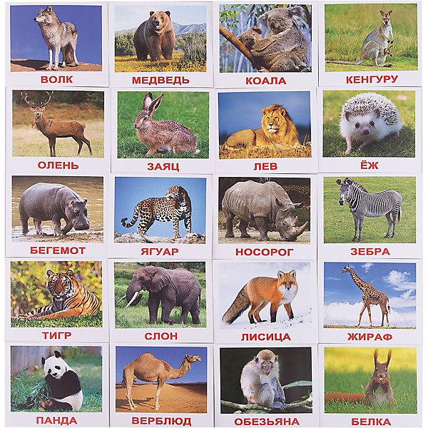 Набор обучающих мини-карточек Вундеркинд с пелёнок Дикие животные 20 штукОзнакомление с окружающим миром<br>Характеристики:<br><br>• ISBN: 4612731630423;<br>• бренд: Вундеркинд с пеленок;<br>• вес: 50 гр;<br>• материал: картон;<br>• размер: 10x8,5x0,5 см;<br>• возраст: от 1 года;<br>• количество карточек: 20 шт.<br><br>Комплект карточек МИНИ-рус. яз. «Дикие животные» представляет из себя дорожный набор с  карточками с подписями на русском языке. Рекомендуется для занятий с детьми в поездках, на прогулке, в машине и т.д. Желательно использовать с детьми, освоившими наборы большого формата, т.к. Доман рекомендует начинать с крупного шрифта и постепенно сокращать его размер.<br><br>Поучительные карточки развивают память, внимание, усидчивость и другие полезные навыки. Набор подходит для детей от 1 года. <br><br>В набор карточек входят изображения: заяц, волк, белка, олень, ёж, лев, тигр, ягуар, зебра, слон, коала, лисица, медведь, обезьяна, жираф, кенгуру, бегемот, носорог, панда, верблюд.<br><br>Комплект карточек МИНИ-рус. яз. «Дикие животные» можно купить в нашем интернет-магазине.<br>Ширина мм: 100; Глубина мм: 85; Высота мм: 5; Вес г: 50; Возраст от месяцев: 12; Возраст до месяцев: 60; Пол: Унисекс; Возраст: Детский; SKU: 7182319;