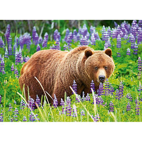 Пазл Castorland Midi Медведь на лугу, 120 деталейПазлы классические<br>Характеристики товара:<br><br>• возраст: от 7 лет;<br>• пол: для девочек и мальчиков;<br>• вид: контурный пазл-мозайка;<br>• количество элементов: 120 шт.;<br>• материал пазла: картон;<br>• размер картинки: 32х23 см.;<br>• размер упаковки: 17,5х13х3,7 см.;<br>• вес: 300 гр.;<br>• упаковка: картонная коробка;<br>• страна изготовитель: Польша.<br><br>Пазл предоставляет возможность мобрать картинку с изображением медведя на лугу.<br><br>В комплект входят 120 деталей, легко соединяющихся между собой. Готовая картина с изображением бурого медведя на лавандовом лугу отлично впишется в интерьер любой комнаты.<br><br>Игра с пазлами будет развивать логическое и пространственное мышление ребенка, а также внимательность и усидчивость.<br><br>Пазл можно купить в нашем интернет-магазине.<br>Ширина мм: 175; Глубина мм: 130; Высота мм: 37; Вес г: 300; Возраст от месяцев: 84; Возраст до месяцев: 2147483647; Пол: Унисекс; Возраст: Детский; SKU: 7327802;