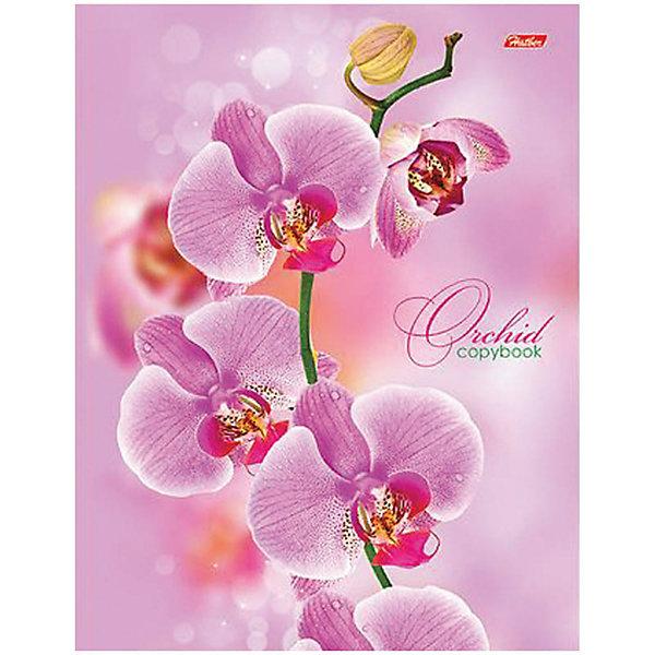 Hatber Тетрадь на кольцах А5 120л. Розовая орхидея