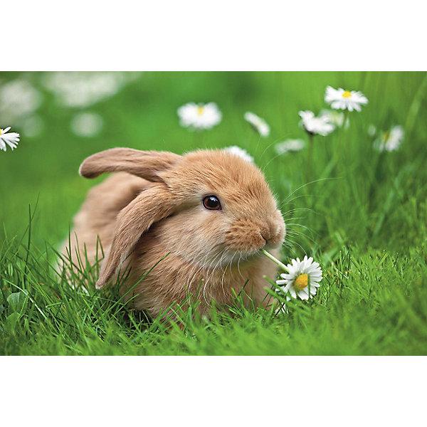 Ravensburger Пазл «Кролик в ромашках» XXL 150 шт # ravensburger пазл кролик в ромашках xxl 150 шт