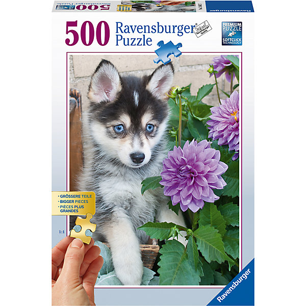Пазл «Маленький хаски» 500 штСимвол года<br>Характеристики:<br><br>• тип игрушки: пазл;<br>• комплектация: 500 эл;<br>• бренд: Ravensburger;<br>• упаковка: картон;<br>• размер: 34х4х23 см;<br>• размер картинки: 61х46 см;<br>• вес: 751 гр;<br>• возраст: от 6 лет;<br>• материал: картон.<br><br>Пазл «Маленький хаски» 500 элементов представляет из себя увлекательную игру для детей от шести лет. Набор состоит из 500 деталей, выполненных из высококачественного картона. Из них предлагается собрать изображение маленького щенка породы хаски. У него ярко-голубые глаза и очень добрый взгляд. Такой щенок станет настоящим украшением дома и будет повышать настроение при одном взгляде на него.     <br>Головоломки Ravensburger всегда отличаются высоким качеством полиграфии, изготовлены из экологичного сырья. Собранный пазл будет иметь матовую поверхность без бликов, потому как напечатан на качественной ламинированной бумаге. Пазл сделан из плотного картона, с нанесением красочного рисунка и аккуратной вырубкой деталей с четкими гладкими краями, которые позволяют легко состыковывать элементы пазла между собой. Сборка данного пазла сможет увлечь детей и поспособствовать развитию логического мышления и усидчивости.  Они также развивают образное мышление, наблюдательность и внимательность, а также мелкую моторику и координацию движений рук.<br>Пазл «Маленький хаски» 500 элементов можно купить в нашем интернет-магазине.<br>Ширина мм: 340; Глубина мм: 40; Высота мм: 230; Вес г: 751; Возраст от месяцев: 168; Возраст до месяцев: 228; Пол: Унисекс; Возраст: Детский; Количество деталей: 500; SKU: 7376971;