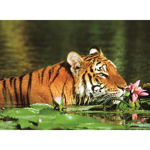 Купить Пазл «Тигр в лилиях» 500 шт, Ravensburger, Германия, Унисекс