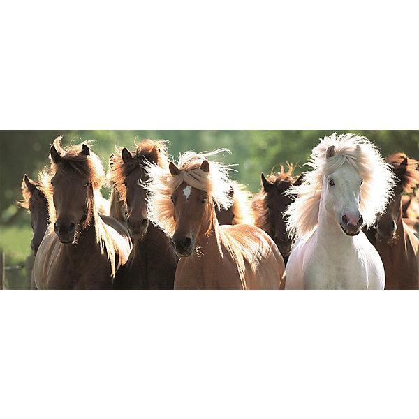 цена Ravensburger Пазл панорамный «Дикие лошади» 1000 шт
