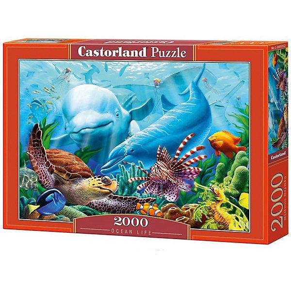 Castorland Пазл Castorland Жизнь океана 2000 деталей цена