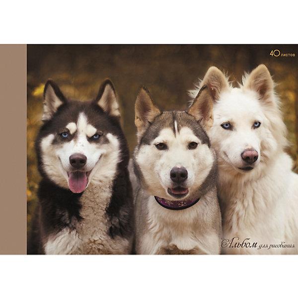 Альбом для рисования Канц-Эксмо Три друга, 40 листовАльбомы и бумага для рисования<br>Характеристики:<br><br>? плотная бумага;<br>? красочный дизайн;<br>? формат: А4;<br>? количество листов: 40;<br>? размер: 6х20х29 см.<br><br>В альбоме для рисования «Три друга» (собаки) от Канц-Эксмо можно рисовать карандашами, восковыми мелками, фломастерами, ручками, различными видами красок. <br><br>Благодаря типу крепления склейка альбом не мнется и в любой момент можно вытащить нужный лист без повреждений блока.<br><br>Канц-Эксмо Альбом для рисования 40 л. Склейка. «Три друга» (собаки) можно купить в нашем интернет магазине.<br>Ширина мм: 292; Глубина мм: 203; Высота мм: 6; Вес г: 272; Цвет: разноцветный; Возраст от месяцев: 72; Возраст до месяцев: 2147483647; Пол: Унисекс; Возраст: Детский; SKU: 8074824;