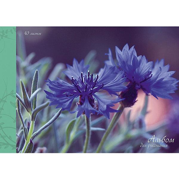Канц-Эксмо Альбом для рисования Канц-Эксмо Нежные васильки, 40 листов альбом для рисования 40л а4 эксмо серия золотые маки на склейке