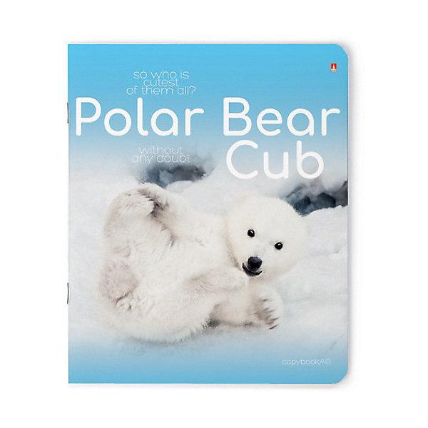 Альт Тетрадь Белые медвежата 48 листов, 5 шт., клетка