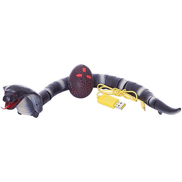 Робот на ИК управлении 1toy Robo Pets Королевская кобра, чёрнаяДругие радиуправляемые игрушки<br>Характеристики:<br><br>• возраст: от 3 лет;<br>• материал: пластик, металл;<br>• комплектация: игрушка, пульт управления, зарядное устройство usb;<br>• цвет: черный;<br>• тип батареек: AG13 / LR44;<br>• наличие батареек:  входят в комплект; <br>• вес: 472 гр;<br>• размер: 45х3х3 см;<br>• страна бренда: Россия;<br>• бренд:  1 TOY.<br><br>Королевская кобра (черная) на ИК управлении, 45 см станет приятной неожиданностью для многих ребятишек. Это игрушечное животное выглядит очень реалистично. Контролировать его движения ребенок сможет при помощи миниатюрного пульта управления.<br><br>Королевскую кобру (черная) на ИК управлении, 45 см можно купить в нашем интернет-магазине.<br>Ширина мм: 450; Глубина мм: 30; Высота мм: 30; Вес г: 472; Цвет: разноцветный; Возраст от месяцев: 60; Возраст до месяцев: 2147483647; Пол: Унисекс; Возраст: Детский; SKU: 8422669;