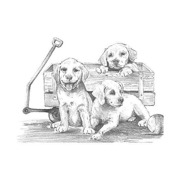 Royal&Langnickel Картина-эскиз по номерам карандашами Щенки, 28,5х39 см