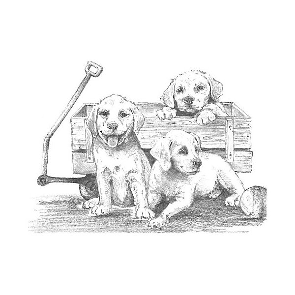 Royal&Langnickel Картина-эскиз по номерам карандашами Royal&Langnickel