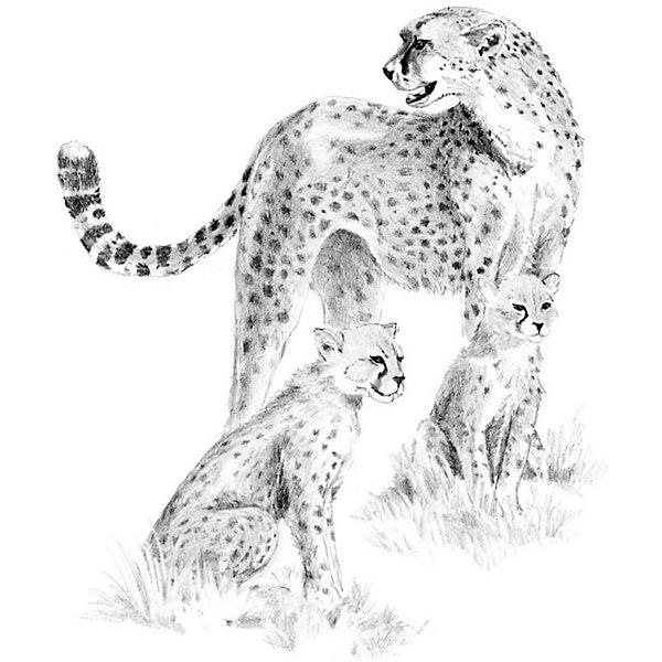Купить SKBN15 Эскиз Леопарды , Royal&Langnickel, Швейцария, Унисекс