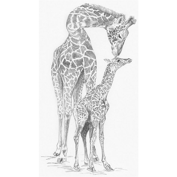Купить Картина-эскиз по номерам карандашами Royal&Langnickel Жирафы , 22х29 см, Китай, Унисекс