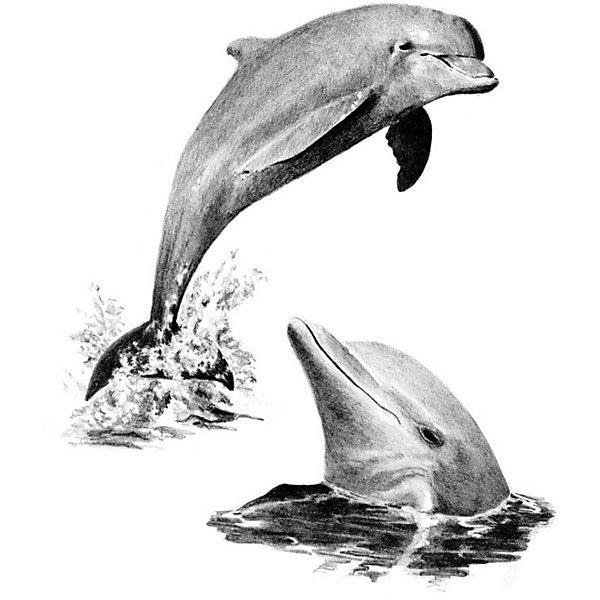 Купить SKBN19 Эскиз Дельфины , Royal&Langnickel, Швейцария, Унисекс